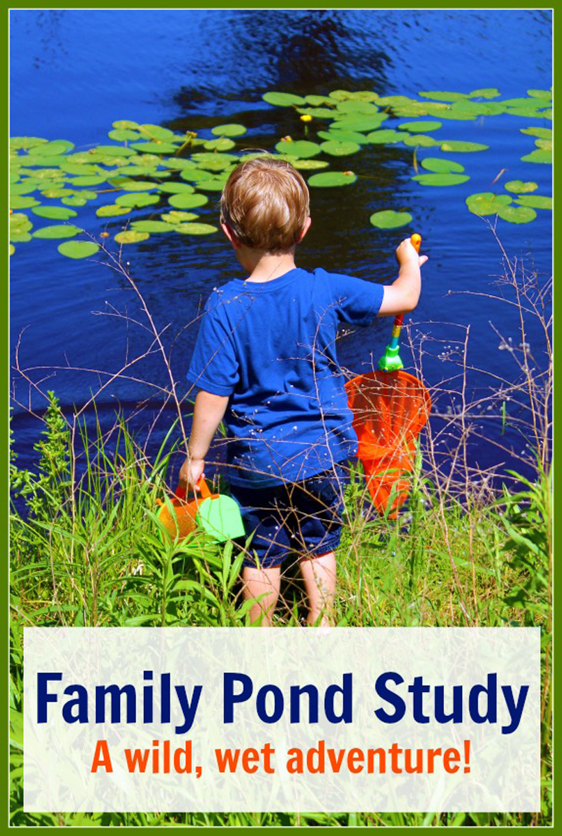 Family Pond Study A Wild Wet Adventure