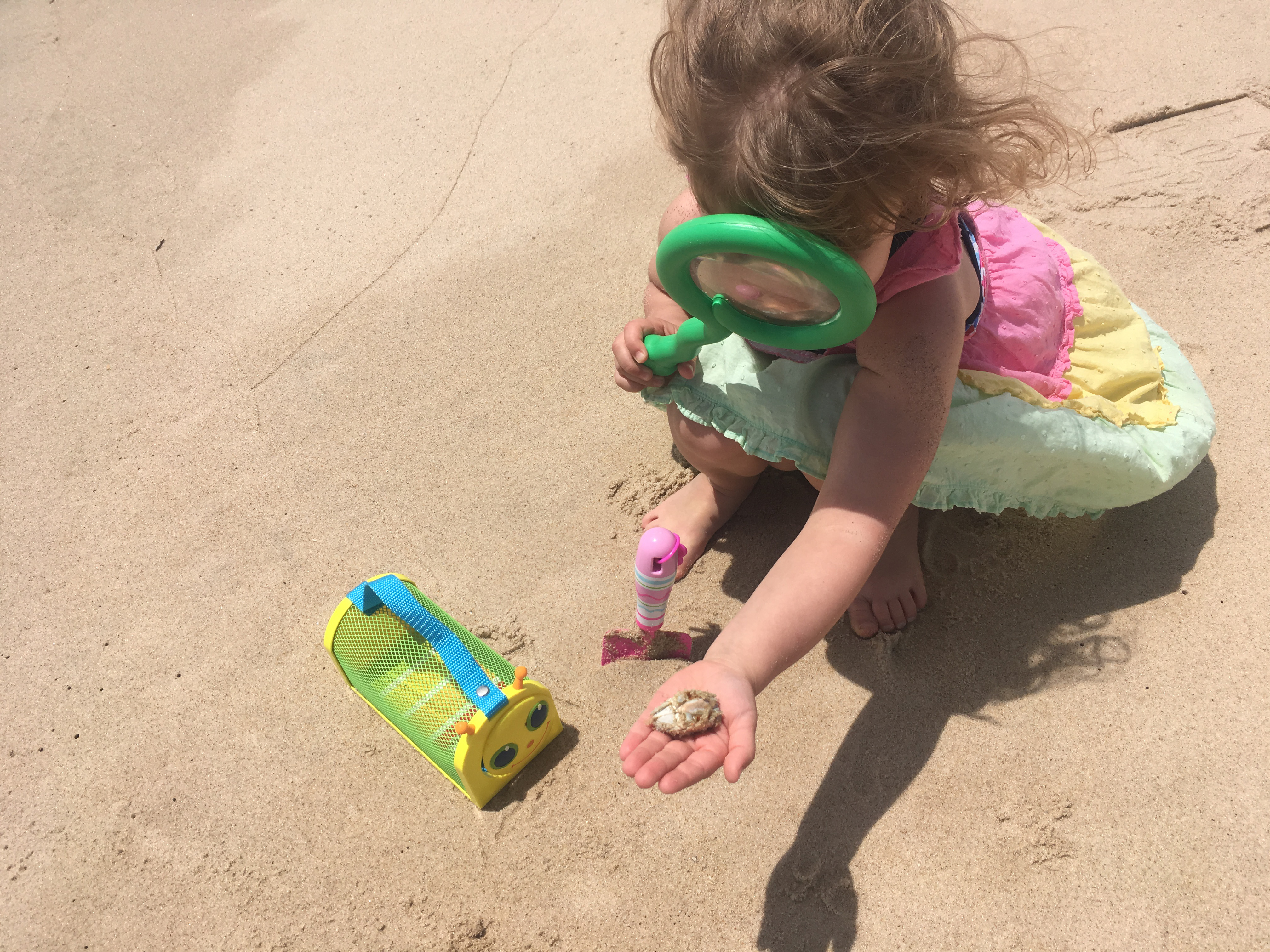 Explore beach critters with a magnifying glass to see their beauty up close!