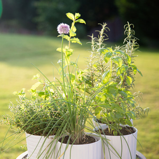 Simple Herb Garden Recipes for Kids